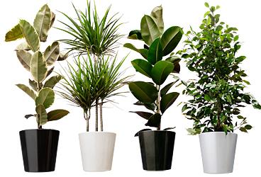kamerplanten-makkelijk-te-onderhouden
